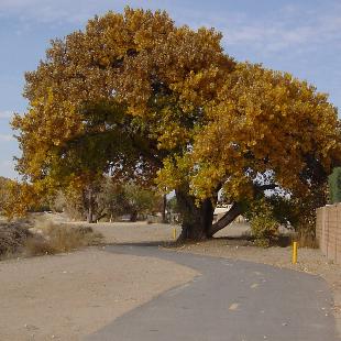 Alameda Drain Trail