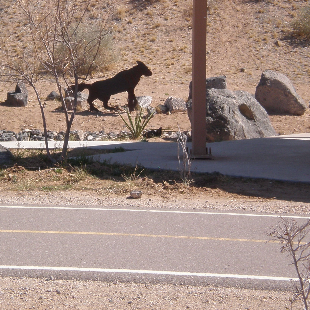 E. Atrisco/West I-40 Trail Image